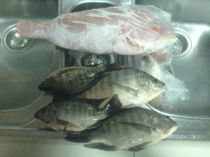 Hasil sebenar tangkapan Biawak Anglers Cult (Tilapia...Ikan Merah sekadar hiasan)